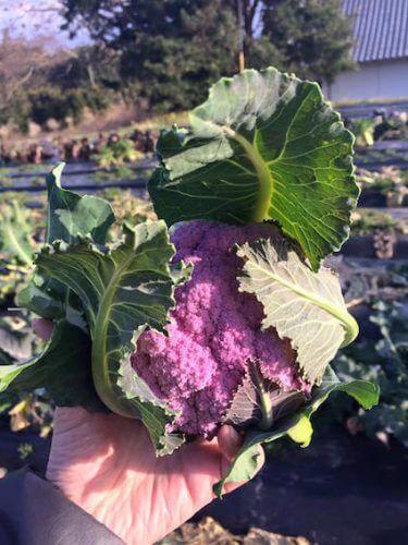 薬膳うちごはんのお野菜、「野菜やトラキ」の無農薬野菜図鑑(1)