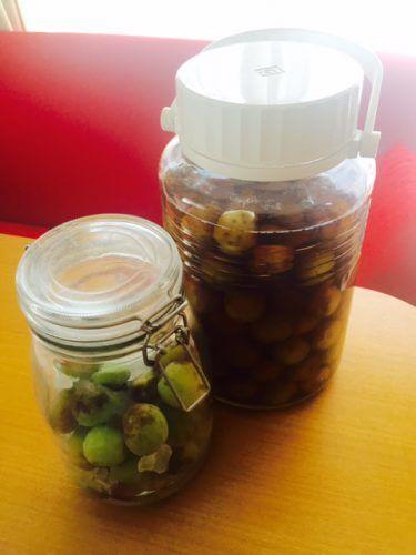 夏バテに効果的! 無農薬の梅で作る梅シロップと梅ブランデー酒!
